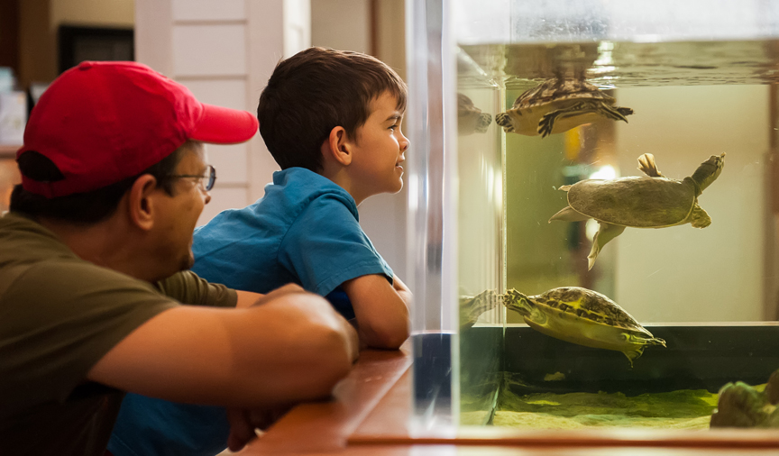 Man and boy looking at tank with turtles
