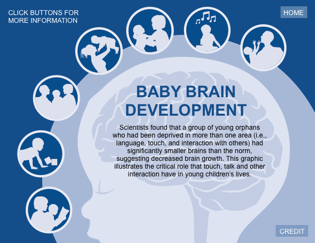 Interactive graphic illustrating a child's brain architecture.